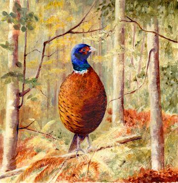 The Lone Pheasant