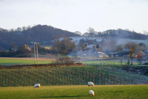 Frosty Fields Near Bridgnorth