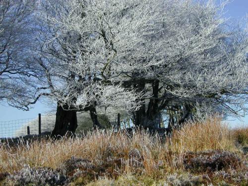 Hoar Frost on Exmoor