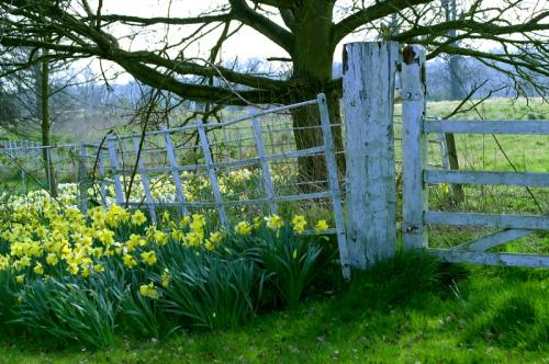 Spring at Badger