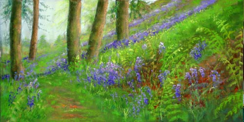 Bluebell path at Withypool