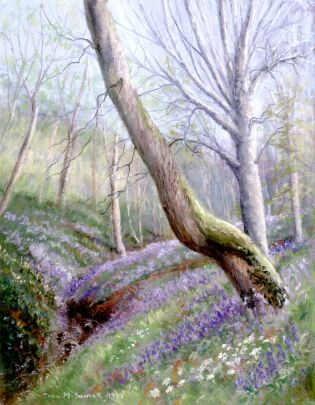 Bluebells in Cotwall End Valley
