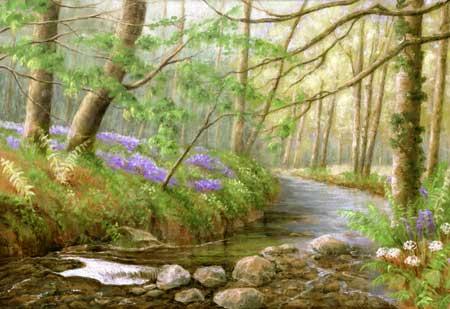 Boscastle Bluebells (Cornwall)