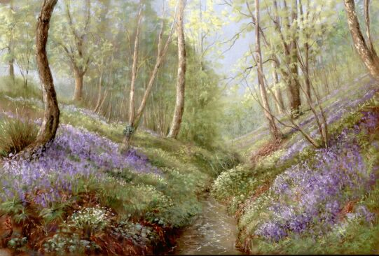Cotwall End Valley With Bluebells
